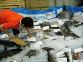 Surugabay fish