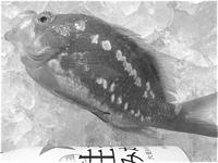 Sakuradai_t-suisan