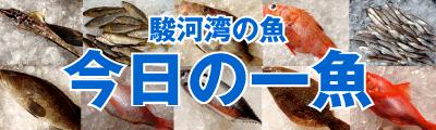 fishday_t-suisan