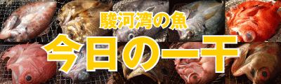 駿河湾の魚 今日の一干 沼津 橘水産