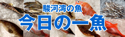 駿河湾の魚 今日の一魚 沼津 橘水産